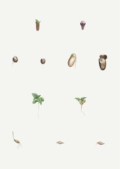 解剖した植物