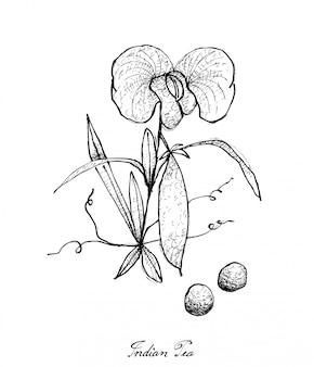 新鮮なインドのエンドウ豆の植物の手描き