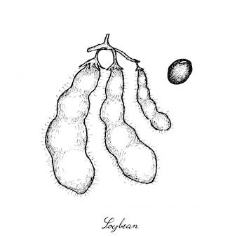 おいしい新鮮な枝豆の手描き