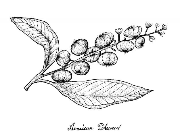 白い背景の上のアメリカのヤマアラシの描かれた手