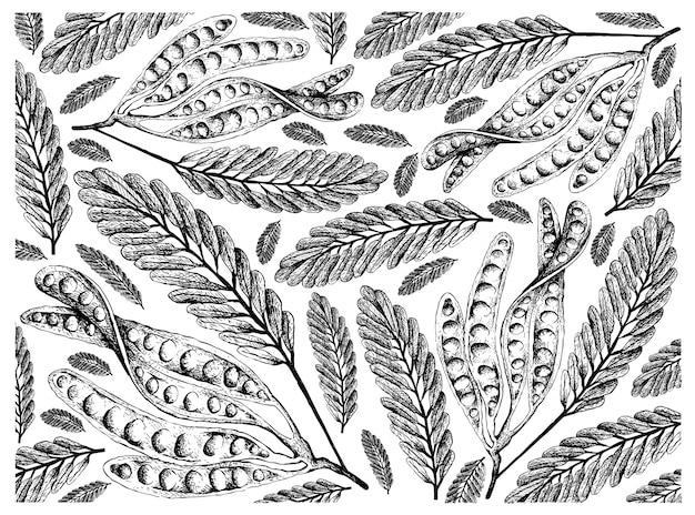 ツイストクラスター豆の背景の手描きのスケッチ
