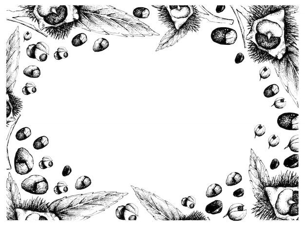 Ручной обращается кадр из японских каштанов и фруктов гуараны