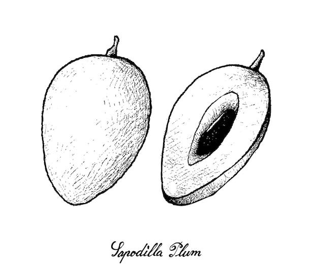 白い背景の上のサポディラプラムの手描き