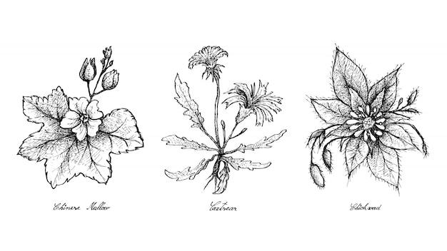 手描きのアオイ科の植物、キャットシア、ハコベ