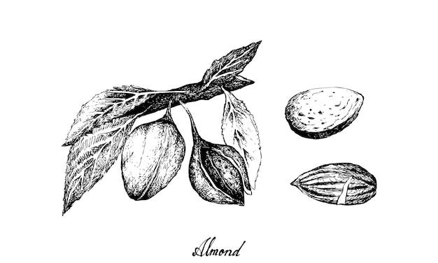 枝に描かれたアーモンドの手