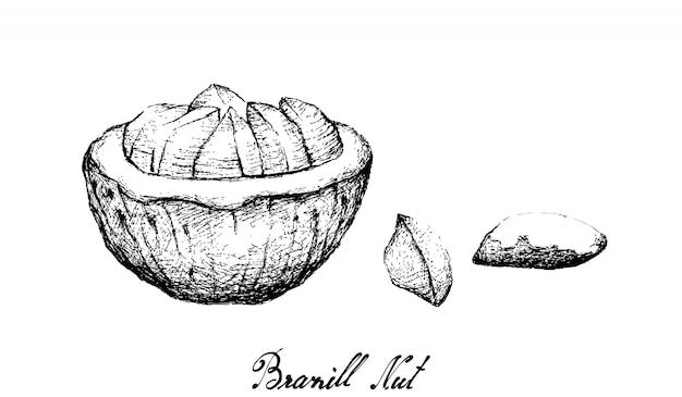 ブラジルナッツの手描き