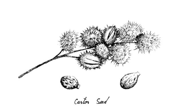 ひまし豆の手描き