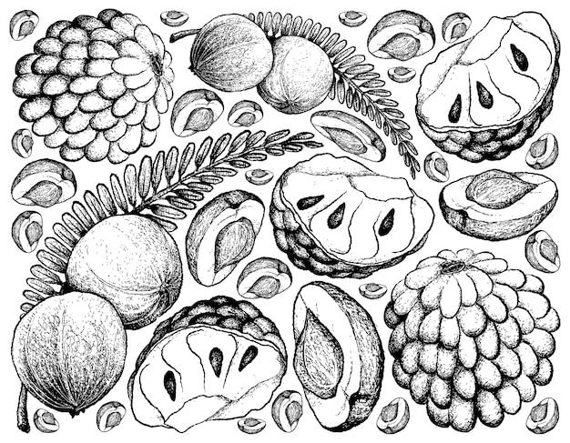 インドのグーズベリーとカスタードアップルの背景の手描き