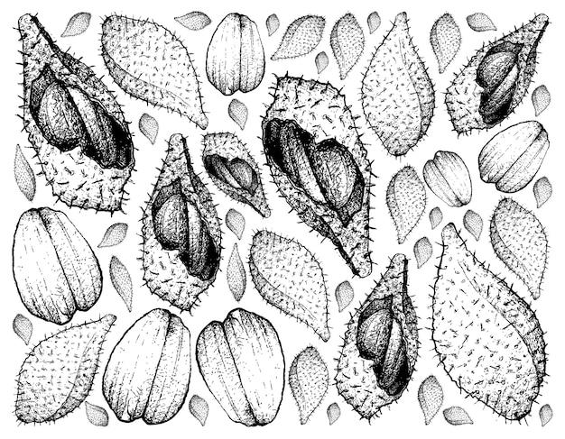 Лук ракам или салакка фрукты.