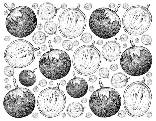 スターアップルフルーツの手描きのスケッチ。
