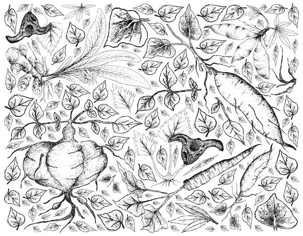 根と塊茎の野菜の背景を描いた手