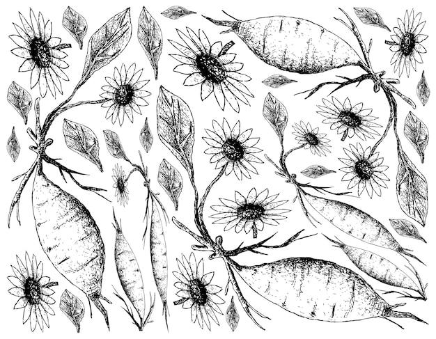 白い背景に新鮮なヤコンの手描き
