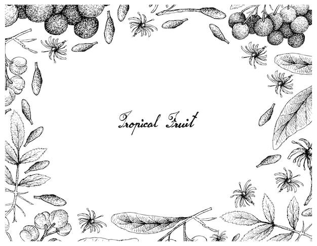 手描きのアメリカン・エルダーとアクロチカ・ペデンクラタの果物