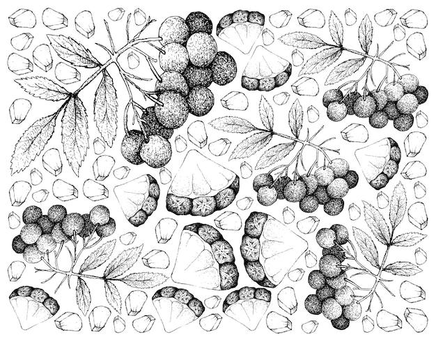 パイナップルとアメリカのエルダーフルーツの手描きの背景