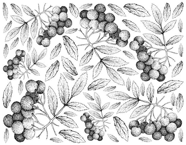 アメリカのエルダーフルーツの手描きの背景