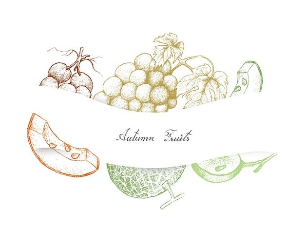 秋の果物、メロン、ブドウの手描き