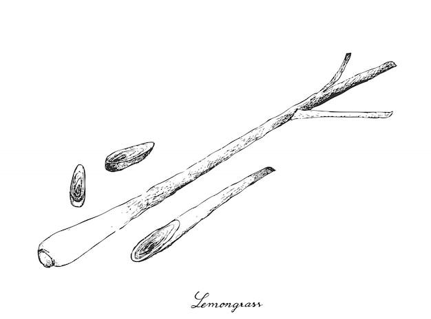 Ручной обращается лимонной травы на белом фоне