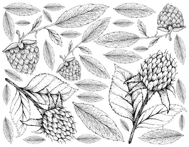 韓国の黒ラズベリーとゴールデンラズベリーの背景の手描き