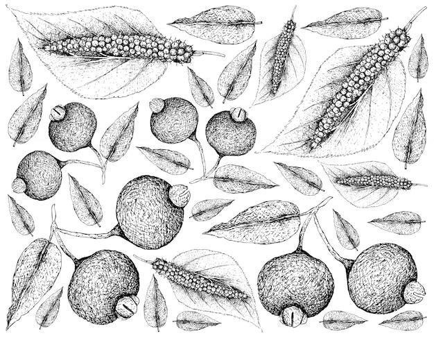 ヒマラヤの桑の実とグアビジュフルーツの背景の手描き