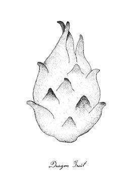 新鮮な熟したドラゴンフルーツの手描き