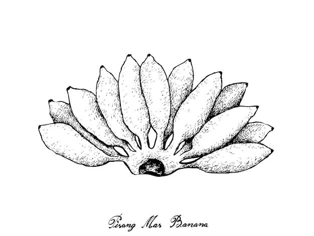 新鮮な熟したピサンマスバナナの手描き