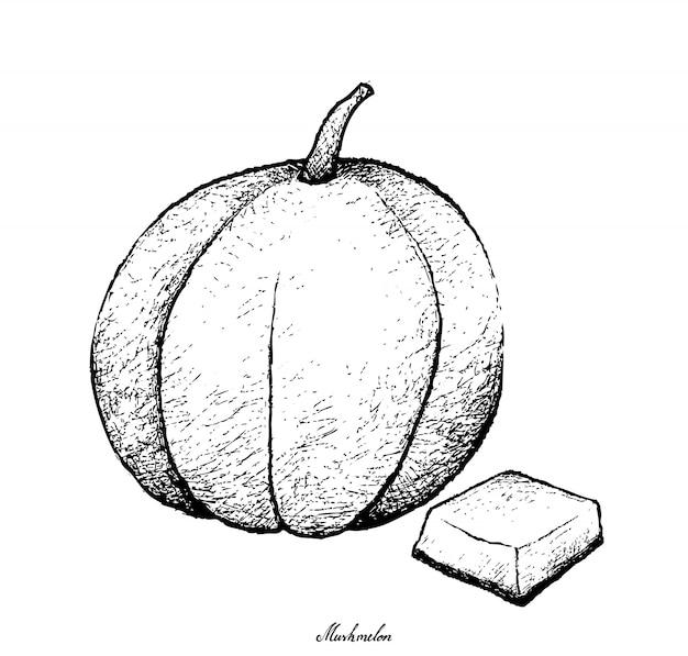 マスクメロン果実の手描き