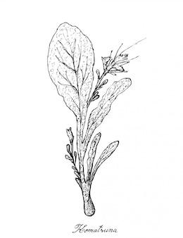 小松菜の白い背景の上に描かれた手