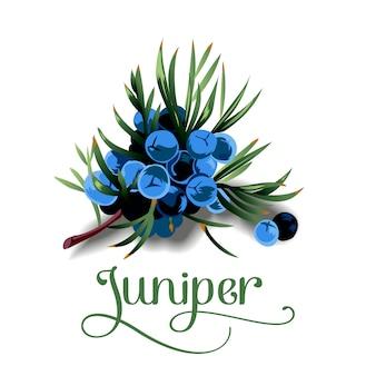 ジュニパーの果物