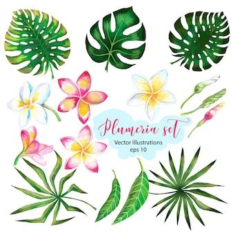 デザインバナーまたはエキゾチックなヤシの葉、プルメリアの花のチラシの水彩画。