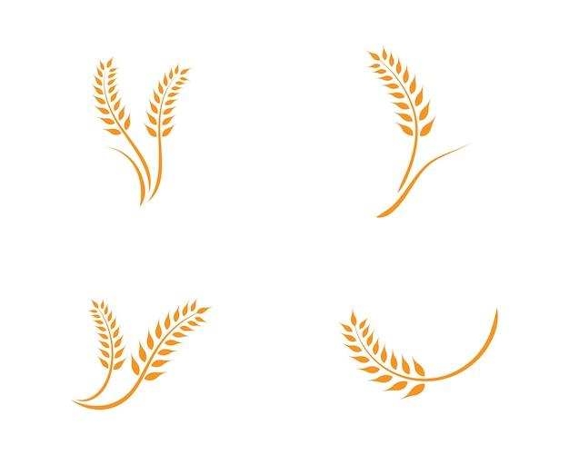 Шаблон логотипа пшеницы