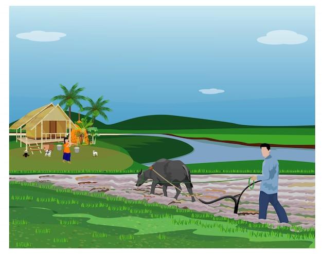 Фермерский плуг в рисовом поле