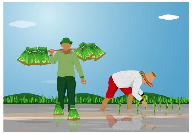 Высадка рисовых семян фермера в векторном дизайне рисового поля