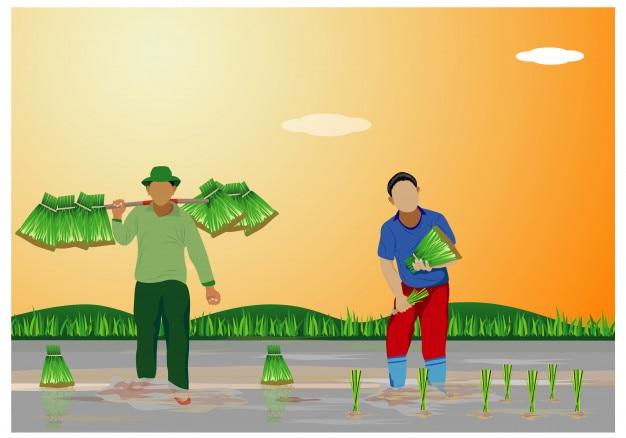 水田のベクターデザインにおける農家の移植イネの播種