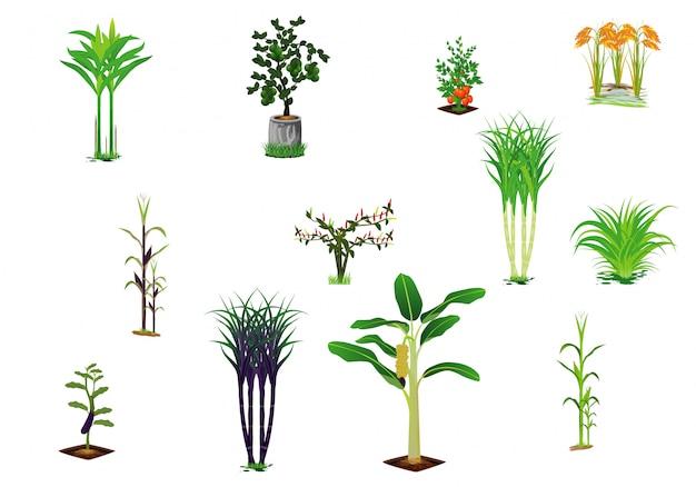 野菜植物のベクトルデザイン
