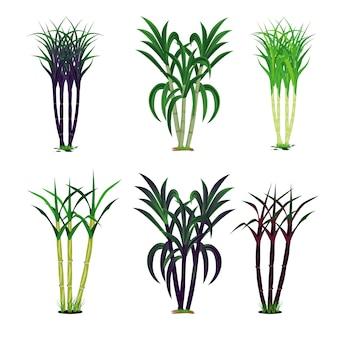 サトウキビ植物のベクトルのデザイン