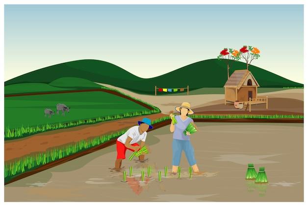 Фермер пересадки риса посева в рисовом поле дизайн вектор