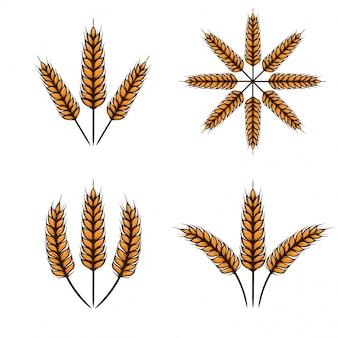 Пшеница векторная иллюстрация