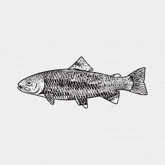 魚ヴィンテージベクトル
