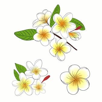Плюмерия или франжипани цветок иллюстрации набор