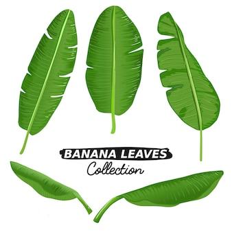 バナナは、イラスト集セットのコレクションを残します。熱帯夏植物ベクトル。