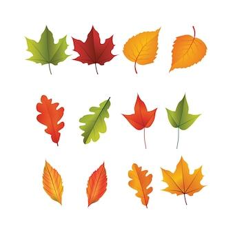 白い背景にある秋の葉のセット