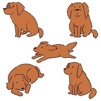 犬、ゴールデン・リトリーバーのセット