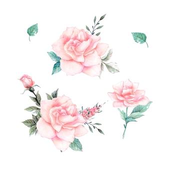 水彩のピンクのバラのビンテージセット。