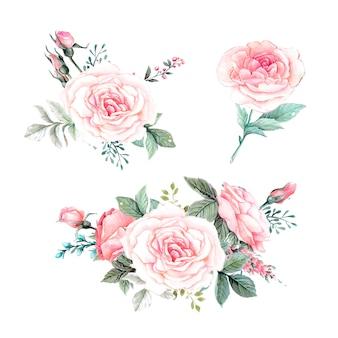 Акварель розовых роз винтаж векторный дизайн набора.