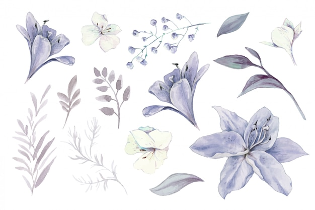 Акварельный набор лилий, бутонов и листьев.