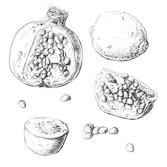 果物をセットする。レモン、ガーネット、キウイ。ベクトル図