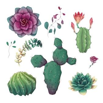 Рисованные цветные кактусы и суккулентный набор.