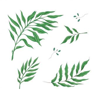 熱帯の緑の葉の明るいセット