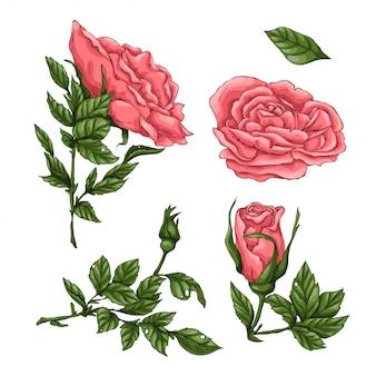 サンゴのバラのセットです。手描きのベクトル図