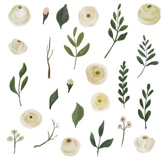 Акварель белая роза